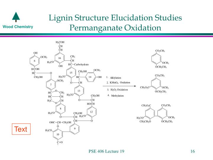 Lignin Structure Elucidation Studies