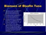 biomass of bluefin tuna