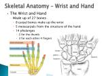 skeletal anatomy wrist and hand