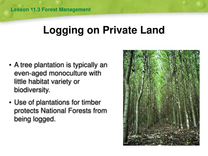 Lesson 11.3 Forest Management