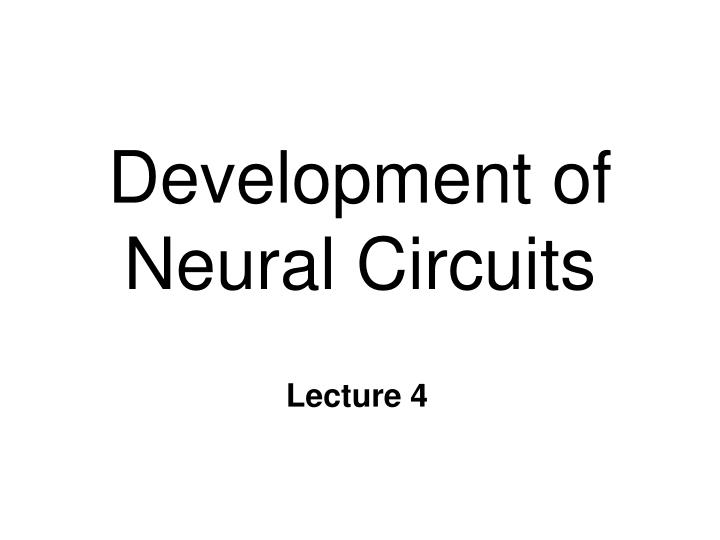 development of neural circuits n.