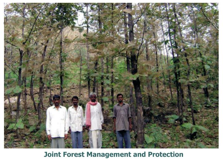 Joint Forest Management and Protection