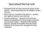 specialized dermal cells