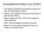 transepidermal water loss tewl