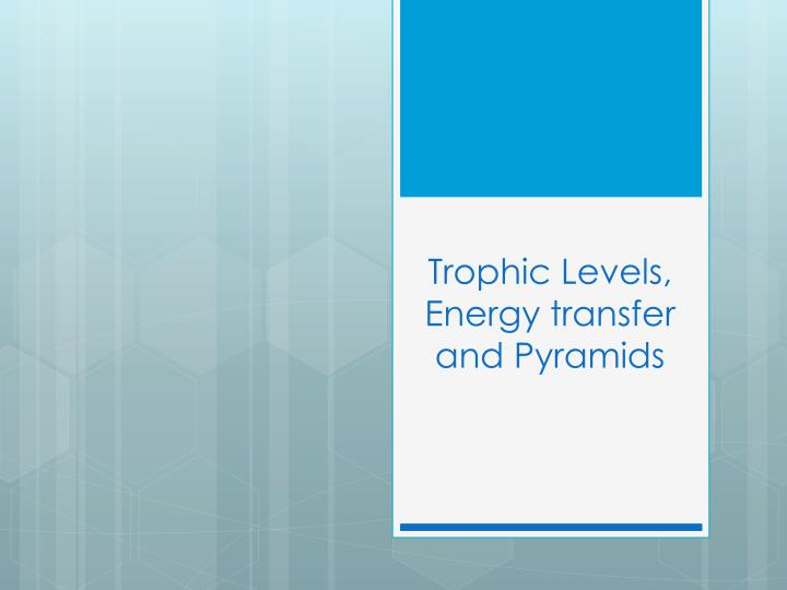 trophic levels energy transfer and pyramids n.
