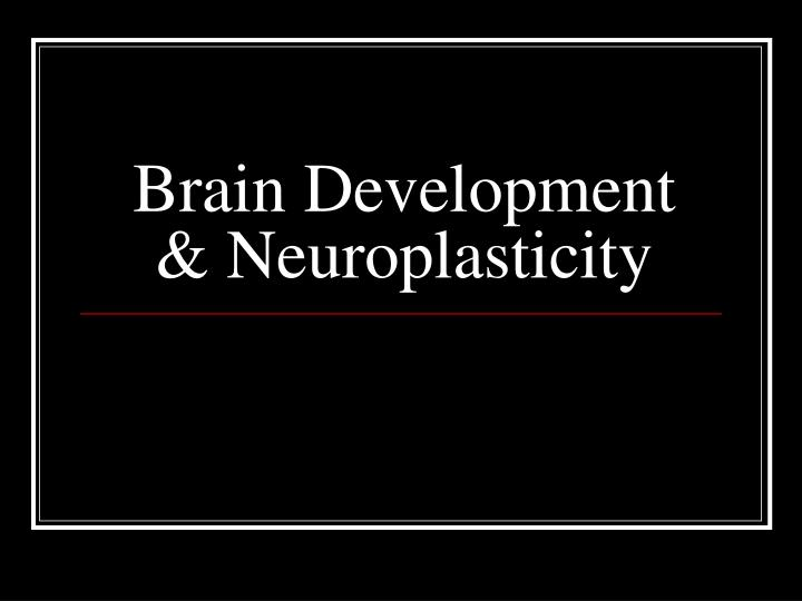 brain development neuroplasticity n.