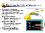 electrical activity of axons continued