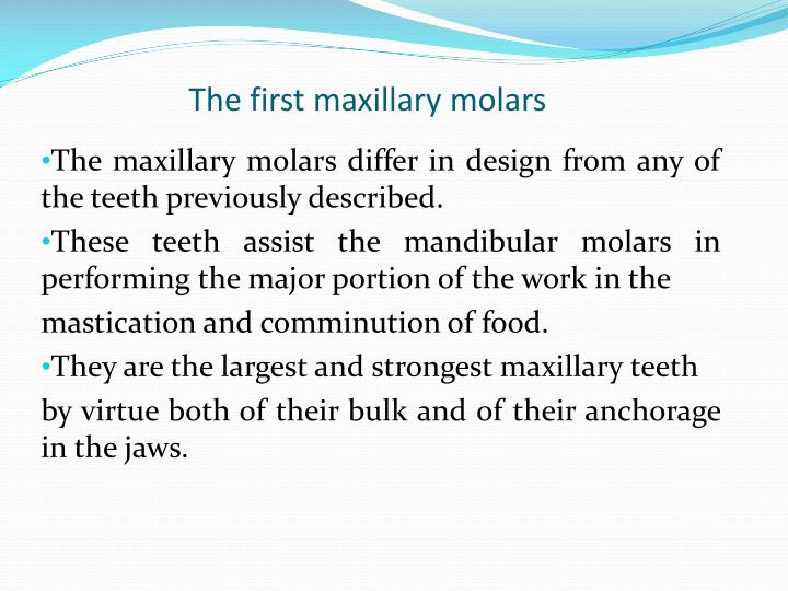 Ppt Human Dentition Dental Anatomy Physiology And Occlusion