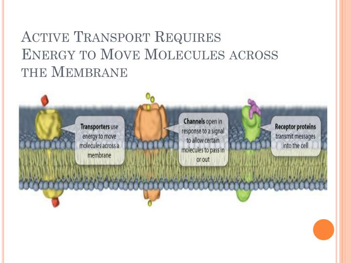 Active Transport Requires