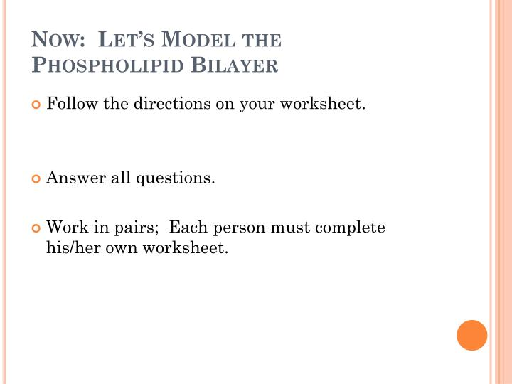 Now:  Let's Model the Phospholipid Bilayer
