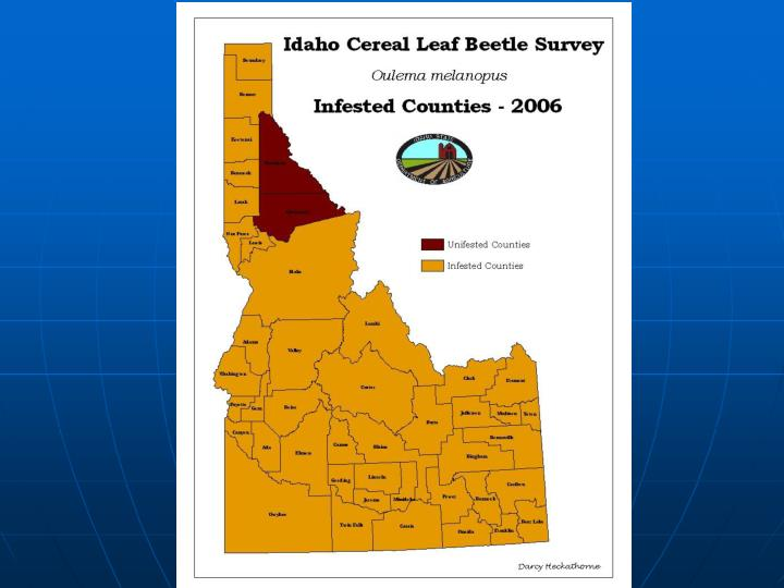 Idaho cereal leaf beetle oulema melanopus project update 2006