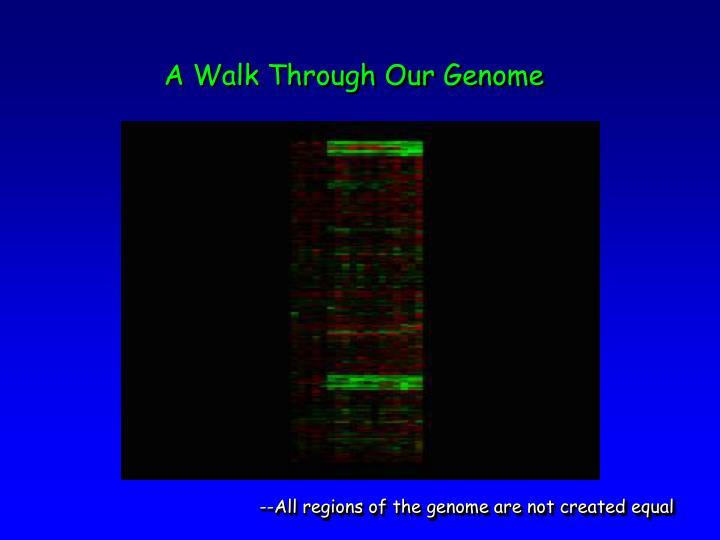 A Walk Through Our Genome