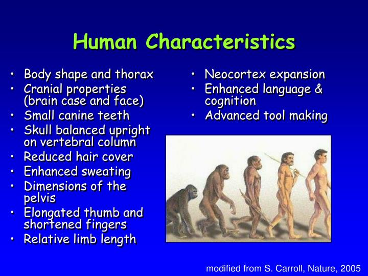 Body shape and thorax