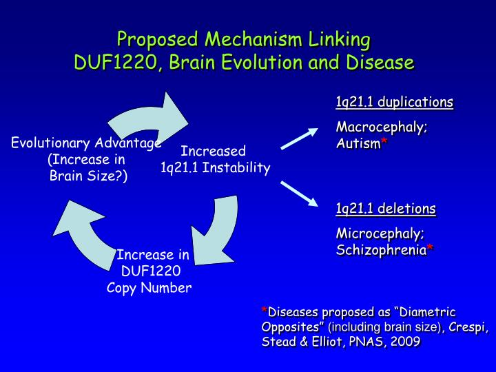 Proposed Mechanism Linking DUF1220, Brain Evolution and Disease