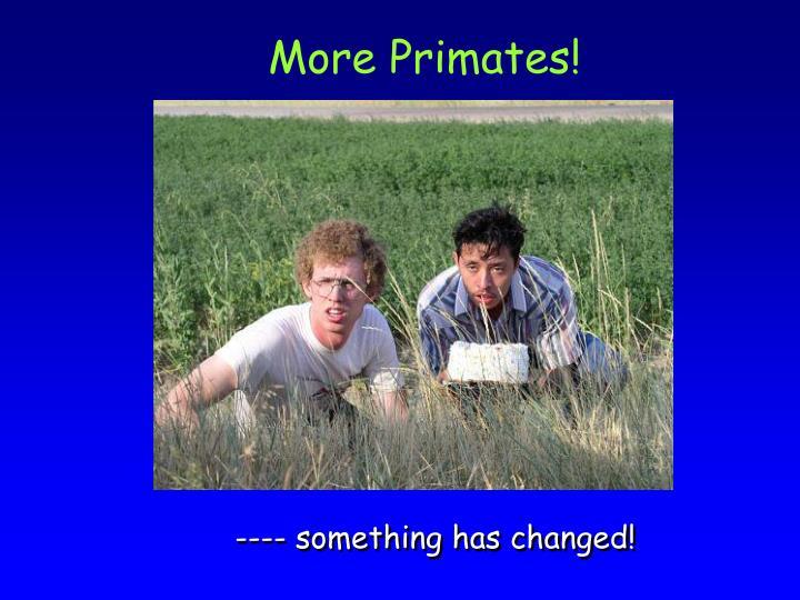 More Primates!