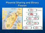 plasmid sharing and binary fission
