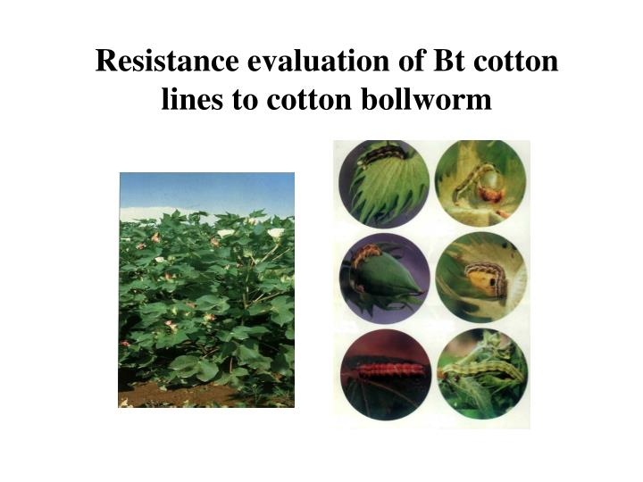 Resistance evaluation of Bt cotton lines to cotton bollworm