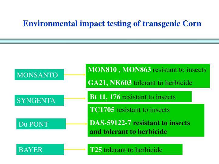 Environmental impact testing of transgenic Corn