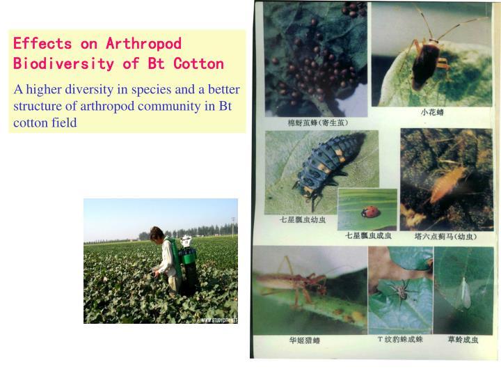 Effects on Arthropod Biodiversity of Bt Cotton
