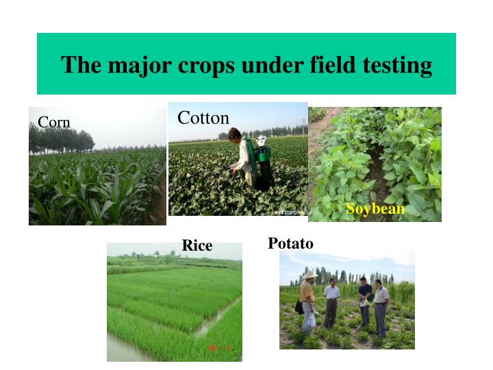 The major crops under field testing