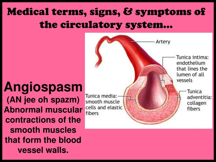 Medical terms, signs, & symptoms of the circulatory system…
