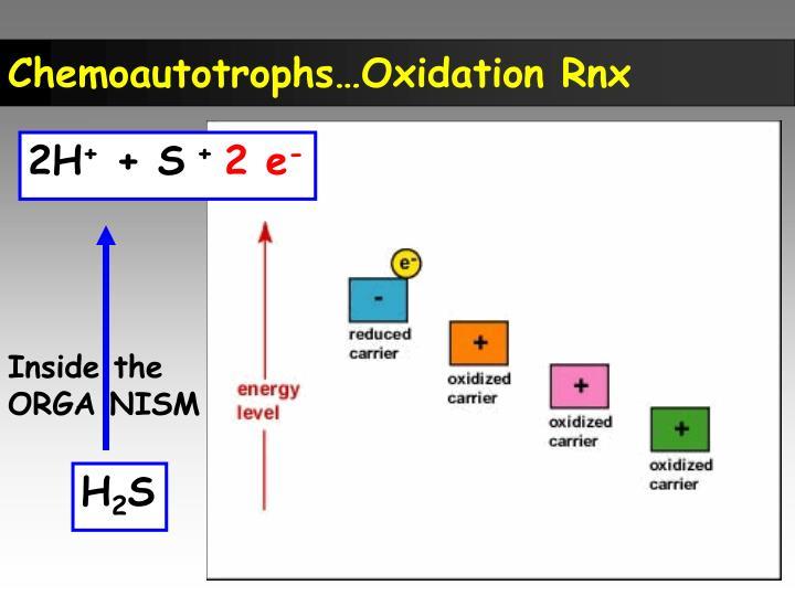 Chemoautotrophs…Oxidation Rnx