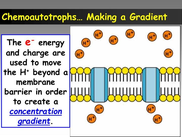 Chemoautotrophs… Making a Gradient