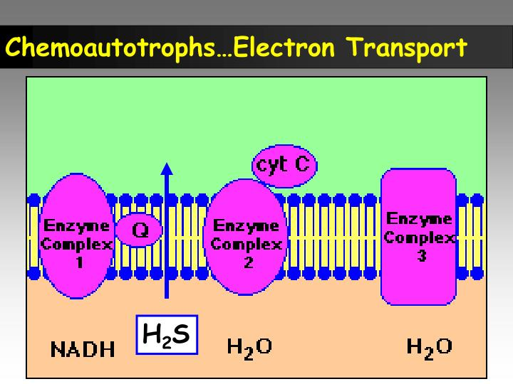 Chemoautotrophs…Electron Transport