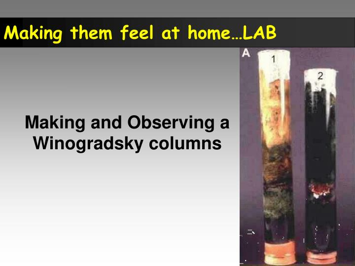 Making them feel at home…LAB