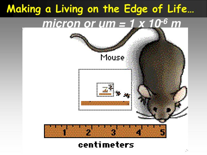 Making a Living on the Edge of Life…