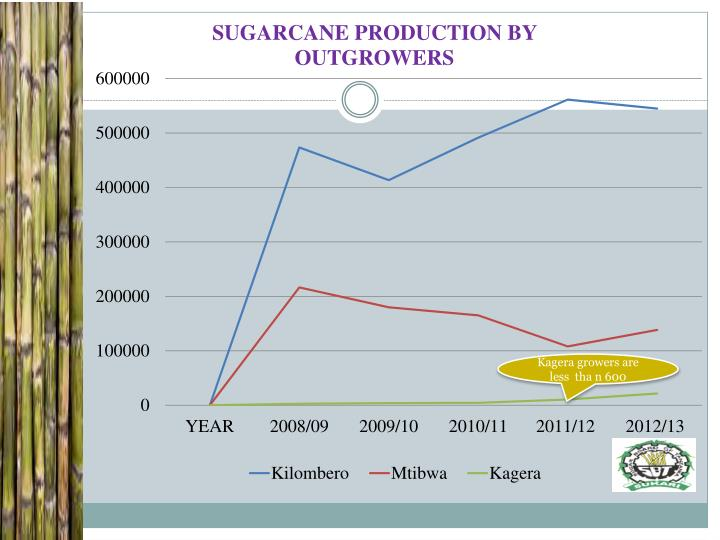 Kagera growers are less