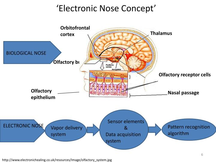'Electronic Nose Concept'