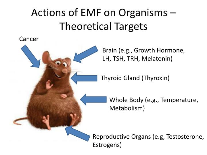 Actions of emf on organisms theoretical targets