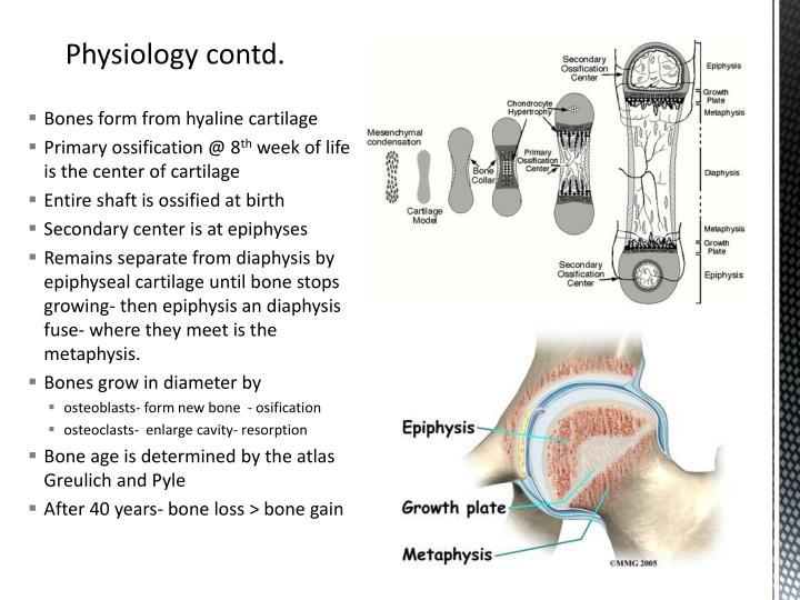 Bones form from hyaline cartilage