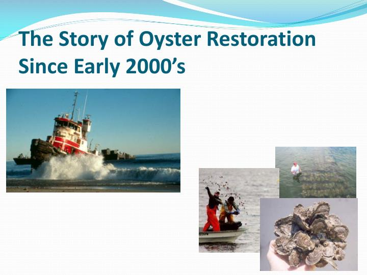 The story of oyster restoration since early 2000 s