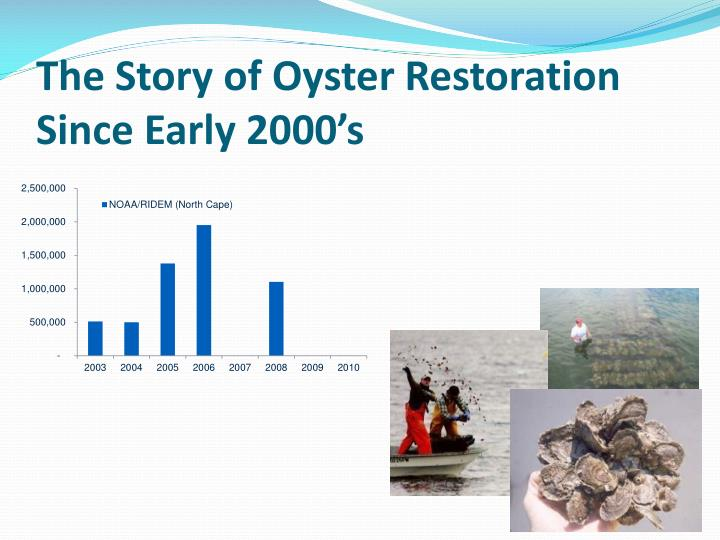 The story of oyster restoration since early 2000 s1