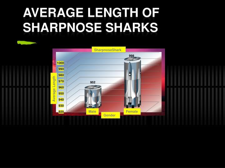 Average length of sharpnose sharks