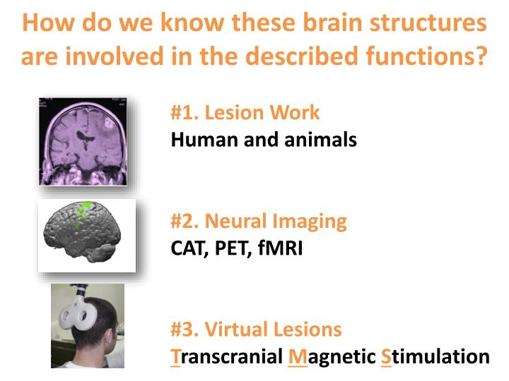 how do we know these brain structures are involved in the described functions n.