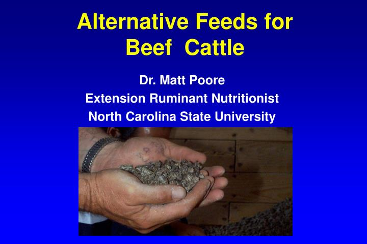 alternative feeds for beef cattle n.