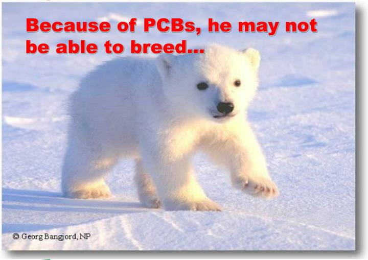Because of PCBs, he may not be able to breed...