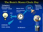 the brain s master clock day
