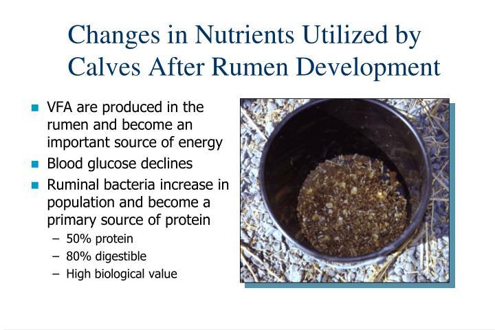 Changes in Nutrients Utilized by Calves After Rumen Development