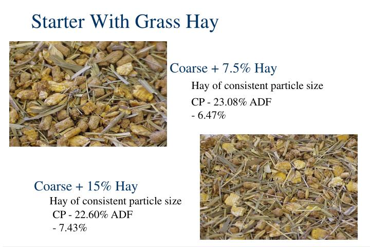 Starter With Grass Hay