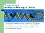 transcription 1 making a mrna copy of dna