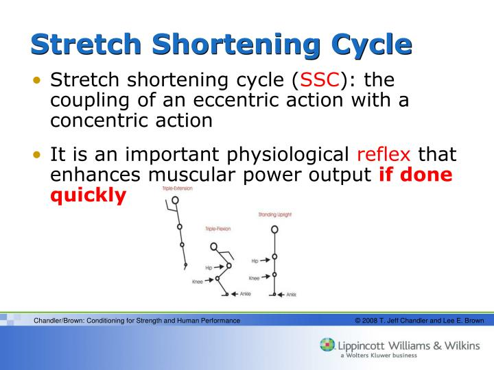 Stretch shortening cycle
