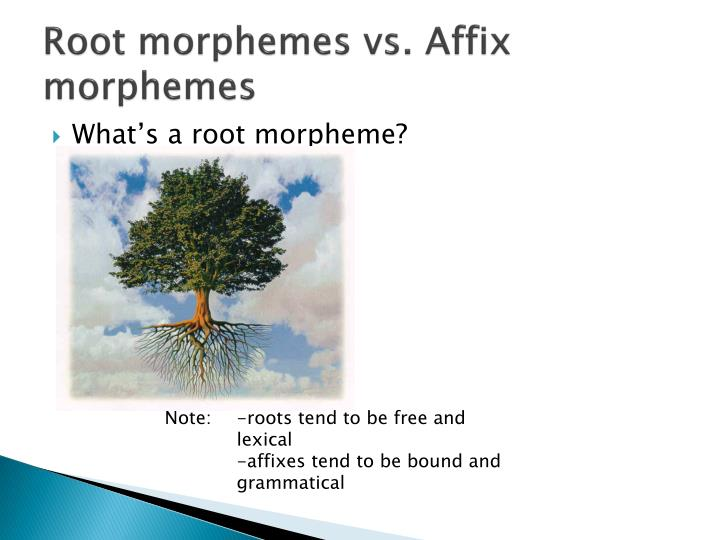 Root morphemes vs. Affix morphemes