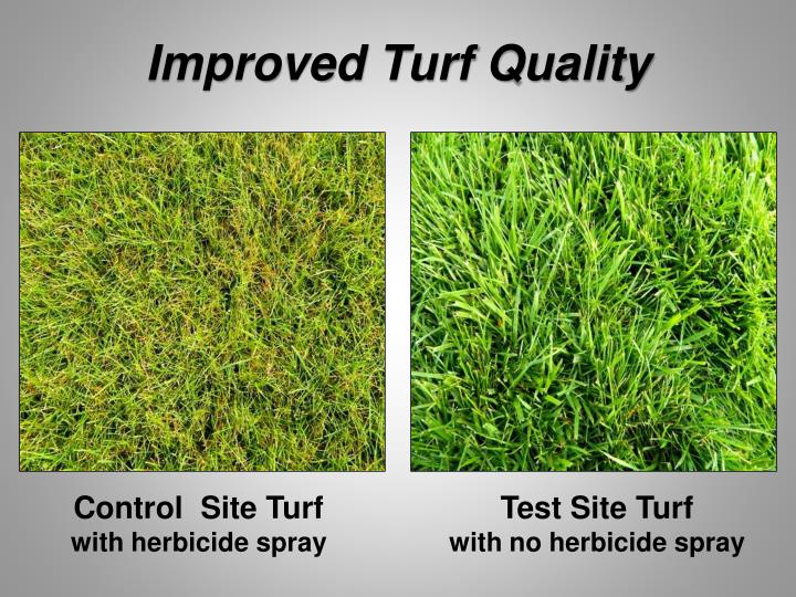 Improved Turf Quality