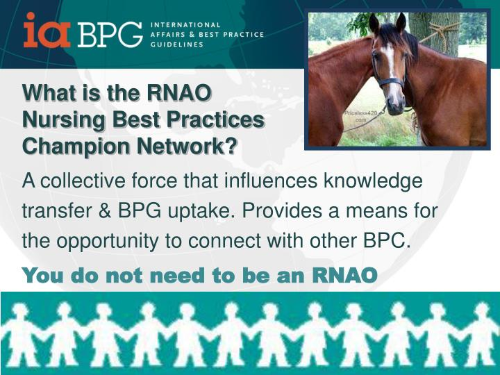 What is the RNAO Nursing Best Practices Champion Network?