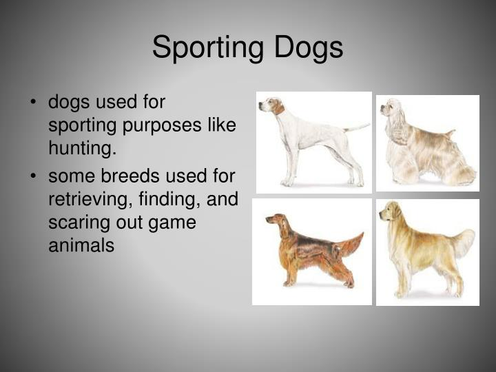 Sporting Dogs