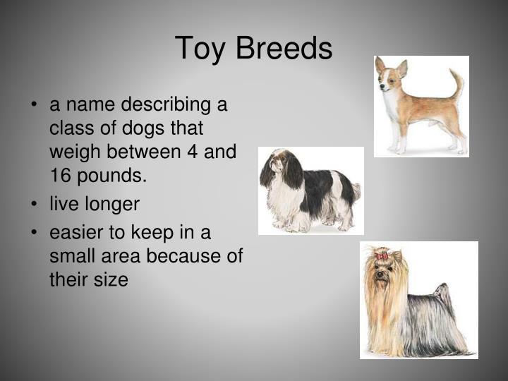 Toy Breeds